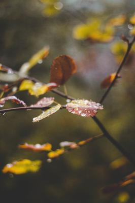 Autumn Leaves in Rain